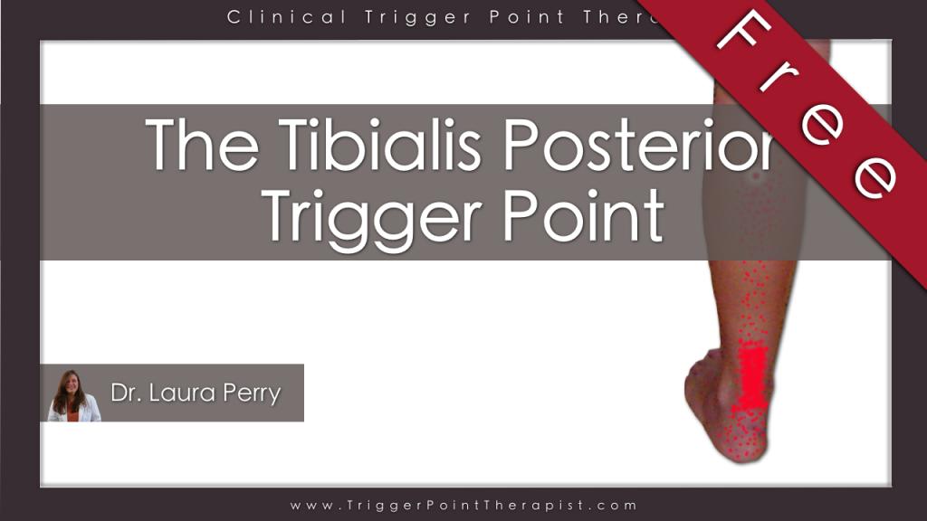 Tibialis Posterior Trigger Point: Runner\'s Achilles Tendonitis ...